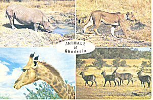 Animals of Rhodesia  Postcard (Image1)