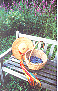 Blueberry Season Sherborn MA Postcard cs2093 (Image1)