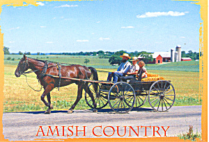 Amish Horse and Open Wagon, PA, Postcard (Image1)