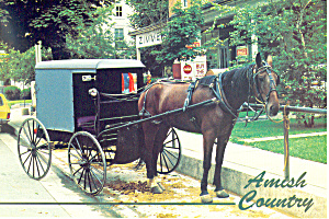 Amish Horse and Buggy at Intercourse , PA, Postcard (Image1)