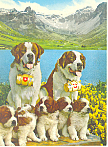 St Bernard Dogs with Puppies Postcard (Image1)