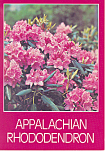 Appalachian Rhododendron Postcard (Image1)