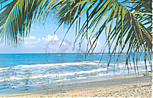 Palms Line the Beach Myrtle Beach SC Postcard cs2256 (Image1)