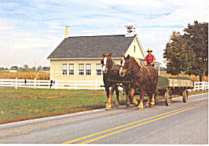 Amish Farm Wagon Draft Horses Postcard Cs2277