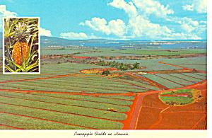 Pineapple Fields in Hawaii  Postcard cs2392 (Image1)