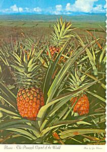 Pineapple Capital of the World Postcard cs2393 (Image1)
