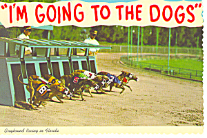 Greyhound Racing in Florida Postcard cs2469 (Image1)