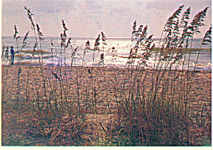 South Carolina s Famed Grand Strand Beaches cs2642 (Image1)