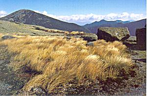 Alpine Meadow on Skylight New York cs3224 (Image1)