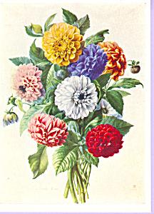 Dahlias Marie Anne Postcard cs3342 (Image1)