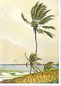 Palm Tree Nassau Winslow Homer Postcard cs3349 (Image1)