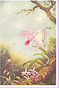 Hummingbird Martin Johnson Heade Postcard cs3351 (Image1)