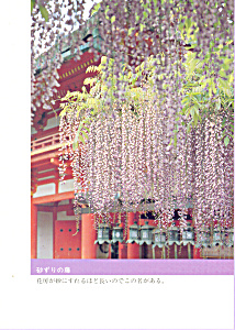 Sand Sweeping Wisteria Postcard Cs3371