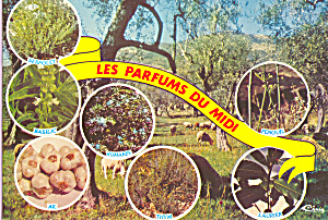 Les Parfums Du Midi Postcard Cs3831