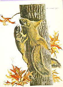 Fox Squirrels Lee Adams Postcard cs3853 (Image1)