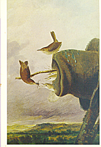 The House Wren John James Audubon Postcard cs3854 (Image1)