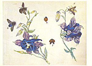 Columbine Bees and other Insects Postcard cs3998 (Image1)