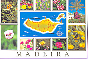 Maderia Island Portugal Flowers in Bloom cs4113 (Image1)