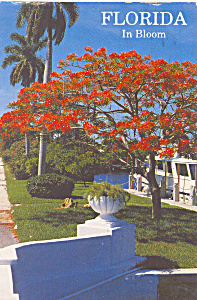 Royal Palms And Poinciana Trees Postcard Cs4667