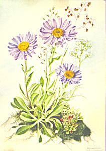 Aster Marianne Schneegans Postcard cs4689 (Image1)