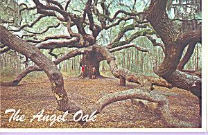 The Angel Oak John s  Island South Carolina cs4714 (Image1)