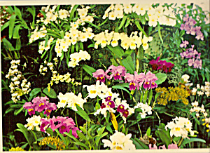 Orchids Longwood Gardens Kennett Square PA cs4792 (Image1)