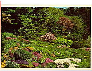 Flowers Longwood Gardens Kennett Square PA cs4797 (Image1)