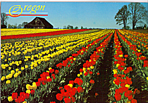 Willamette Valley Oregon cs4873 (Image1)