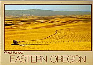Wheat Harvest Eastern Oregon Postcard cs4886 (Image1)