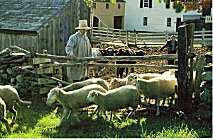 Rancher with Flock of Sheep Postcard cs4951 (Image1)