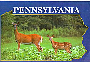 Pennsylvania Whitetails Postcard cs5121 (Image1)