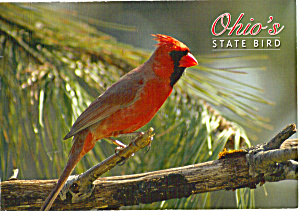 Cardinal State Bird of Ohio cs5131 (Image1)