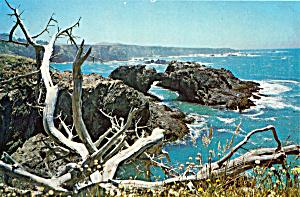 Windswept Shore of Northern California cs5325 (Image1)