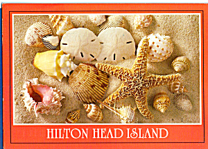 Hilton Head Island Shells cs5396 (Image1)