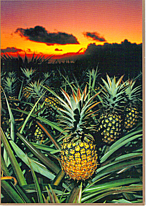 Sunset And Pineapples Postcard Cs5530