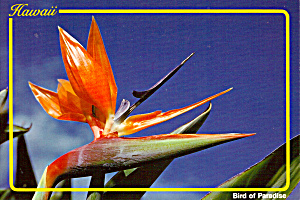 The Bird of Paradise (Image1)