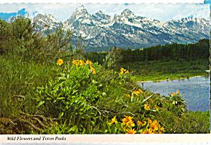 Wild Flowers and Teton Peaks Wyoming cs5637 (Image1)