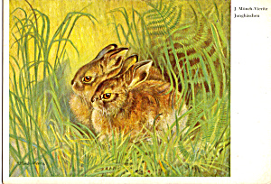 Junghaschen by J Munch Vieritz Postcard cs5824 (Image1)