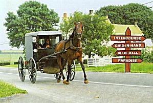 Amish  Buggy (Image1)