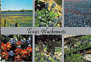 Bluebonnets (Image1)