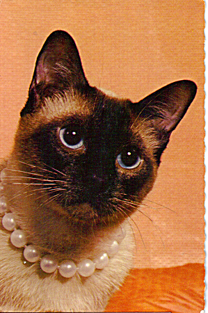 Siamese Cat With Necklace Postcard Cs6336