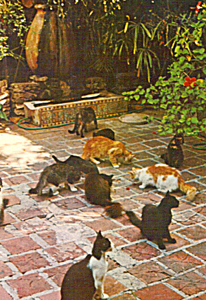 Cats On Hemingway House Patio Key West Florida Cs6365
