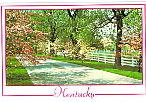 Springtime in Kentucky Postcard cs6386 (Image1)