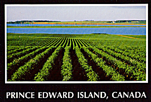 Potato Fields Charlottetown Prince Edward Island Canada Cs6441