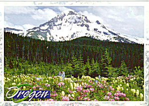 Mt Hood Oregon Postcard Cs6473