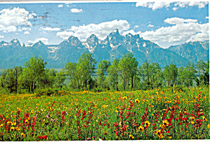 Majestic Grand Teton and Teton Range (Image1)