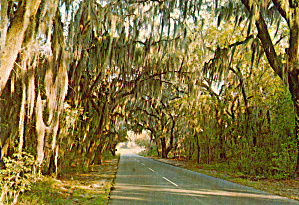 Spanish Moss in Carolina Low Country cs6531 (Image1)