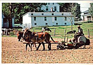 Amish Man and Sons Planting Tobacco Postcard cs6735 (Image1)