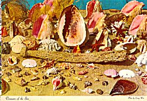 Treasures of The Sea Shells from Tidal Coastline FL cs6755 (Image1)