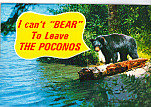 Black Bear in the Poconos (Image1)